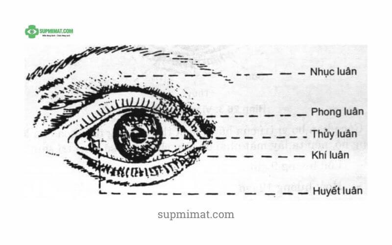 Sụp mí mắt dưới góc nhìn Đông Y là như thế nào? Nó có ý nghĩa gì trong điều trị sụp mí bằng Đông y? 1