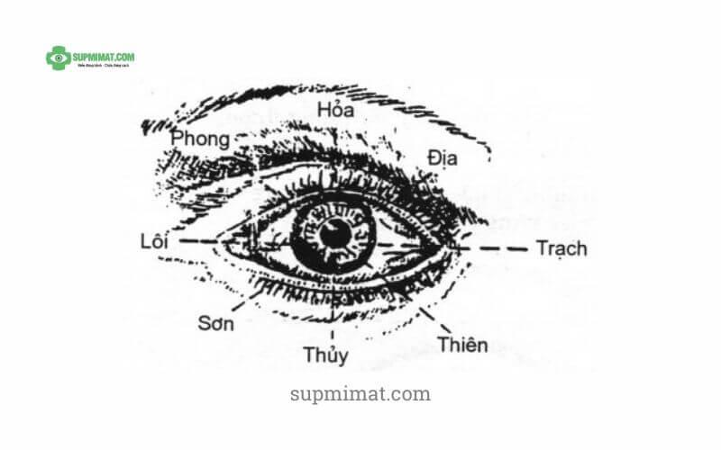 Sụp mí mắt dưới góc nhìn Đông Y là như thế nào? Nó có ý nghĩa gì trong điều trị sụp mí bằng Đông y? 2